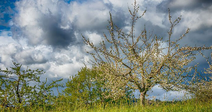 Streuobstwiesen_by_pixaby